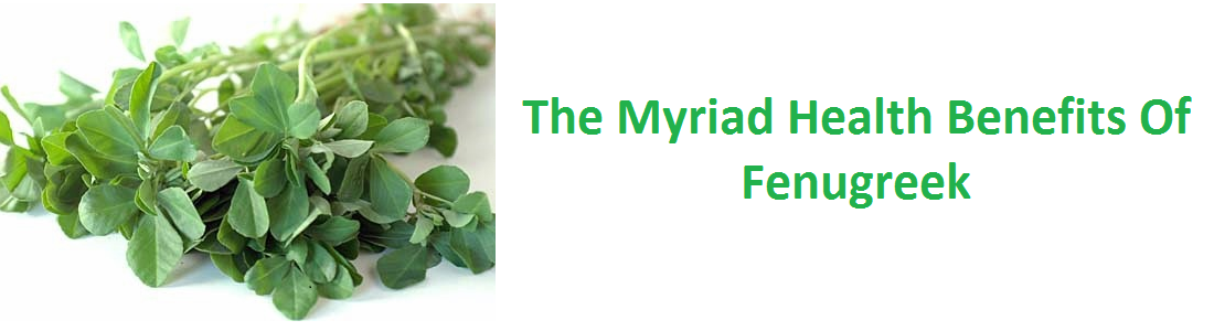 The Myriad Health Benefits of Fenugreek