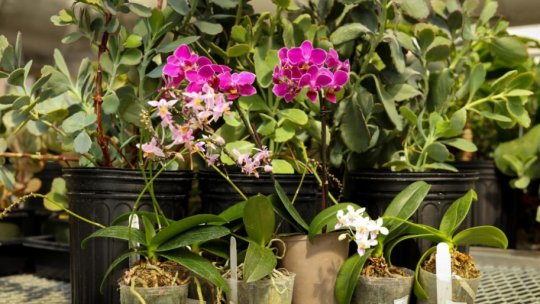 Creating Energy Crops Tolerant to Water Deficits