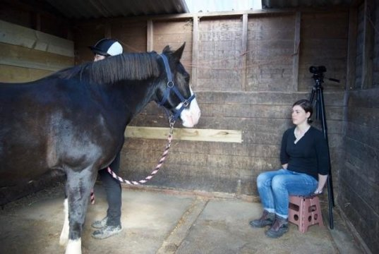 Horses Remember People's Facial Expressions