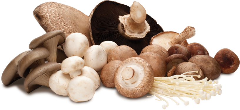 Remarkable Benefits of Mushrooms