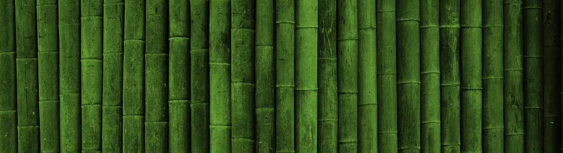Bamboo spine – Few interesting facts