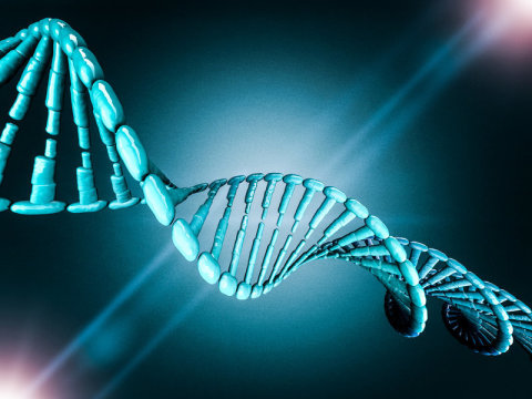 One Gene Can Change Skin Cells Into Stem Cells