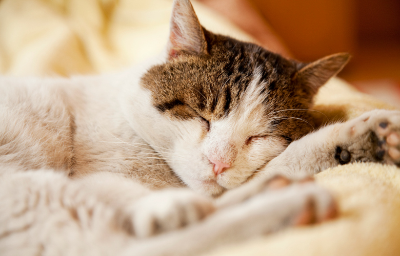 What can you do to keep FIV infected cats Healthy?