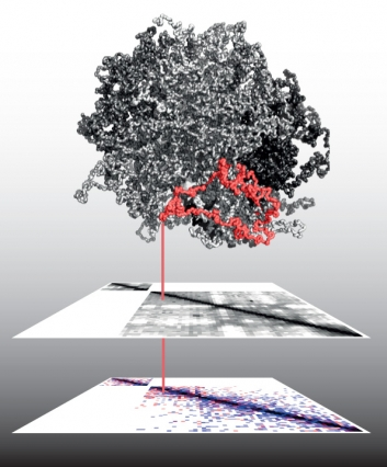 Seeing cancer in three dimensions