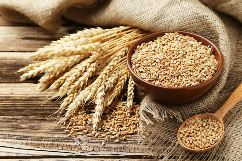 What is wheat allergy?