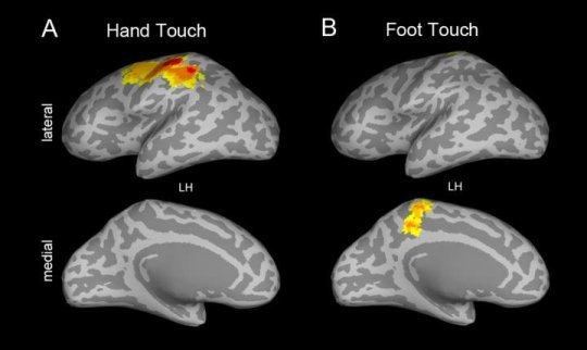 How babies' brains process touch builds foundations for learning