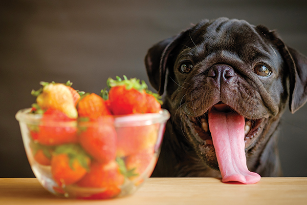 Summer fruits you can share with your dog