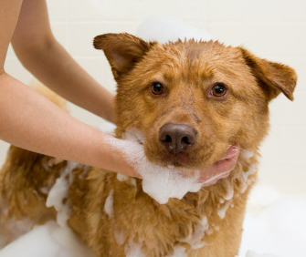 How to Bathe Dogs at Home?