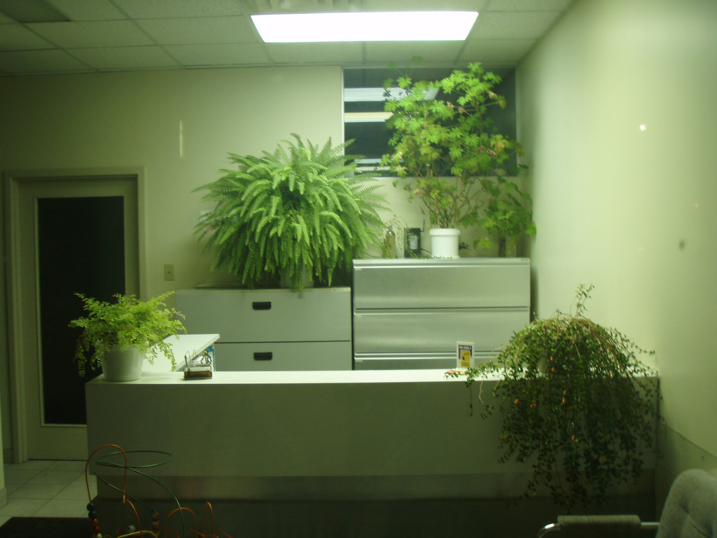 Benefits of plants at workplace