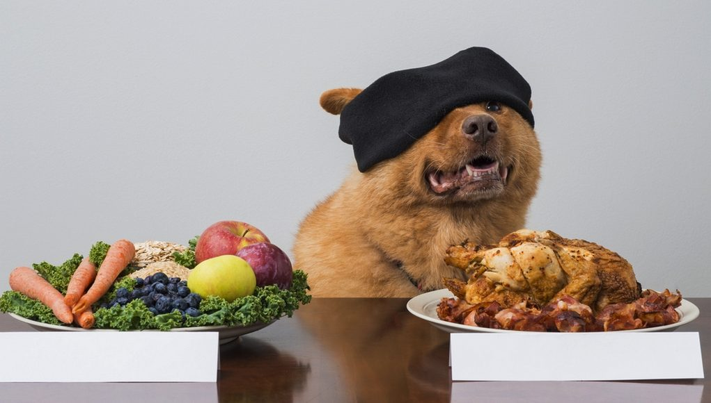CAN YOUR PETS STAY HEALTHY ON A VEGETARIAN DIET?