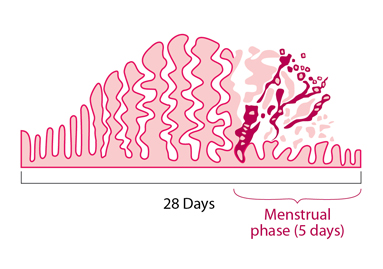 Why do you miss your periods?