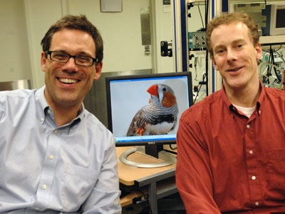 Singing in slow motion-songbirds could aid study of humans' timing