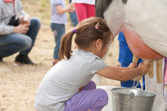 How Animals Protect Farm Children from Asthma
