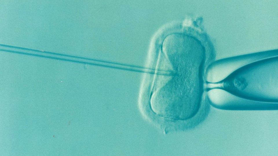 How does IVF work?