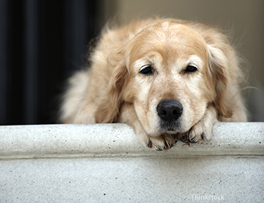 Is your pet suffering from arthritis?