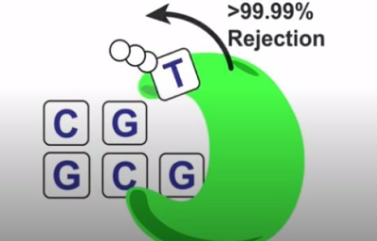 A mutational timer is built into the chemistry of DNA