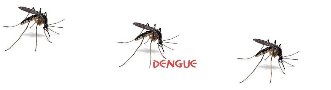 THE DENGUE SEASON – FACTS YOU MUST KNOW!