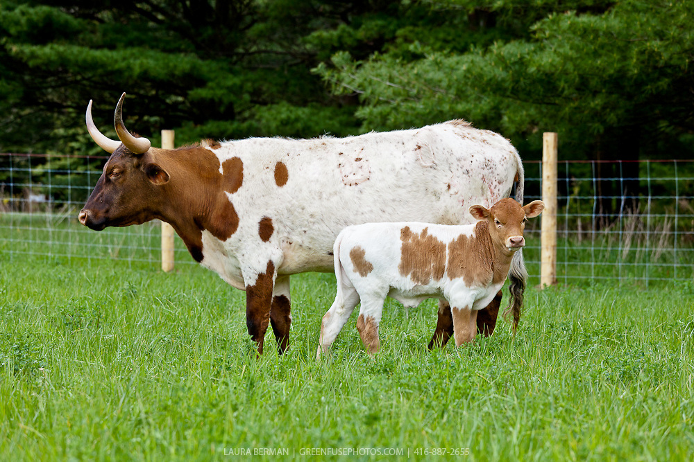 Mad cow disease: Symptoms and Causes