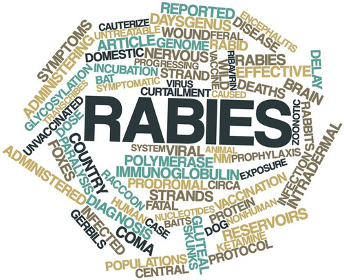 Rabies:Prevention