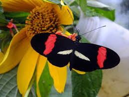 Moths and Flowers: Answer to 'Which-Came-First'