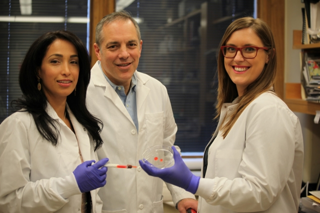 MIT researchers design tailored tissue adhesives