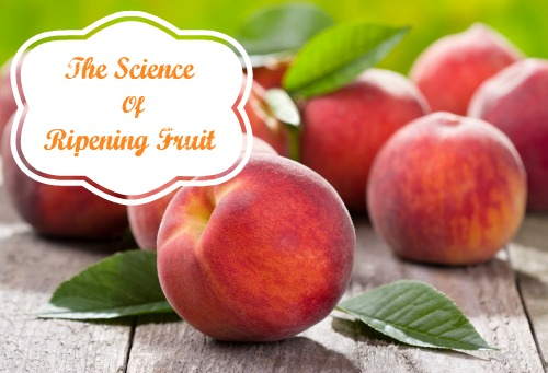 Fruits: Chemistry in Ripening