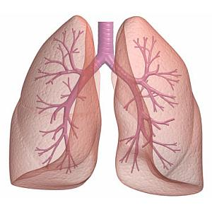 HOMEOPATHY FOR BRONCHIAL ASTHMA