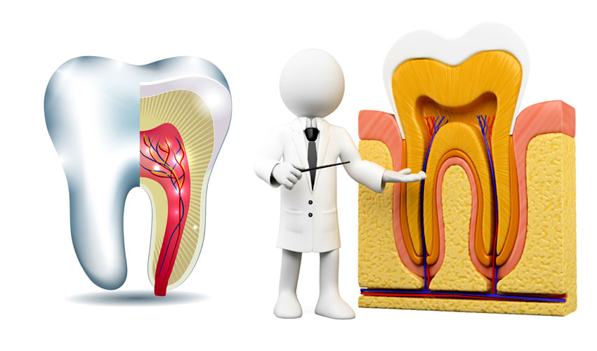 What is Root Canal ?