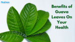 Benefits of Guava Leaves On Your Health