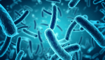 Are The Intestinal Bacteria The New Living Batteries?