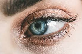 Foods that improve Eye health