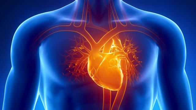 What Is The Main Cause of Cardiomyopathy?