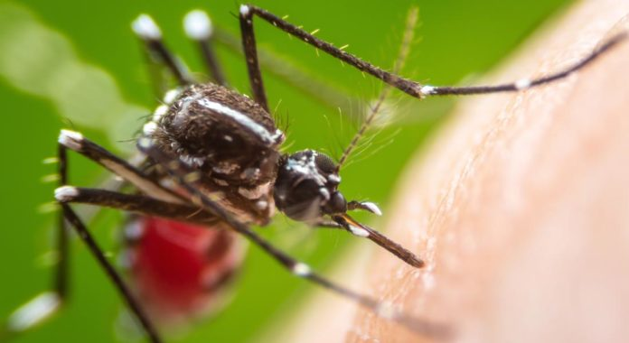 Dengue Fever: Causes, Symptoms and Effective Treatment-By Dr. Rajprabha Patra