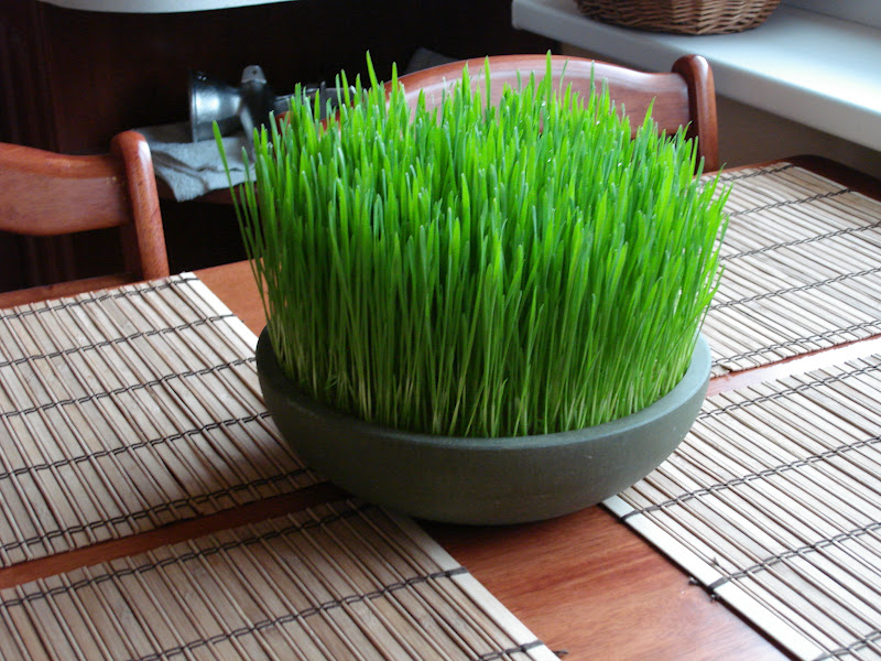 BENEFITS OF WHEATGRASS TEA