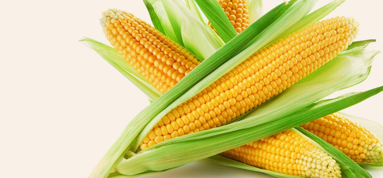 Why corn is good for the body