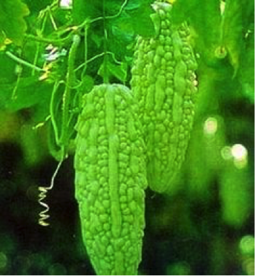 """The Sweetness of Bitter Gourd"""