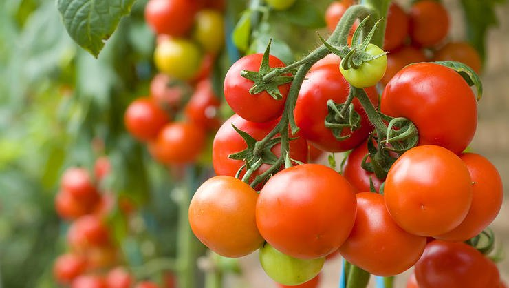 Potential Health Benefits of Tomatoes