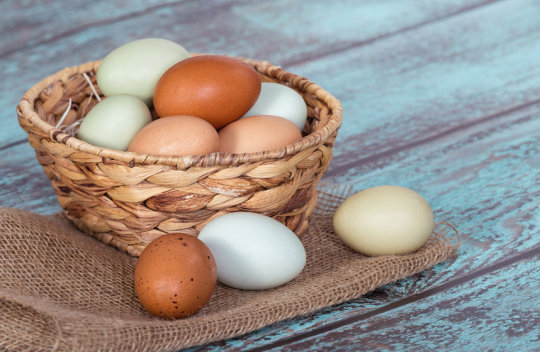 Eggs Not Linked to Cardiovascular Risk: Study